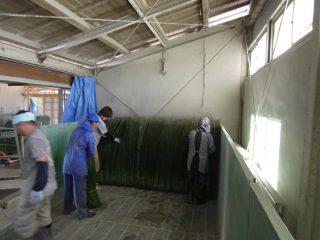 熊本・八代い草農家体験 ④
